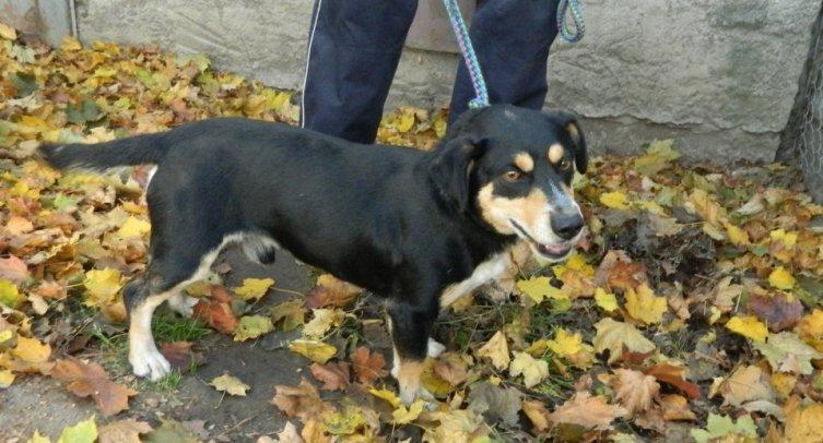Pies odłowiony w Barcinie – fot. archiwum Straży Miejskiej w Barcinie