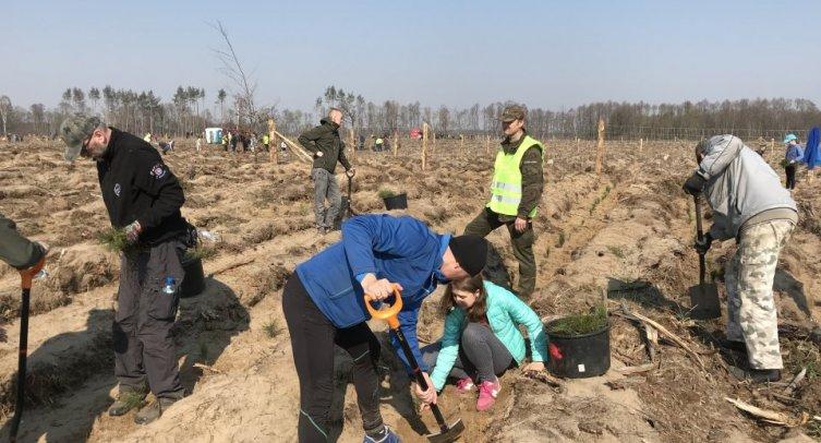 Sadzenie Lasu Społecznego