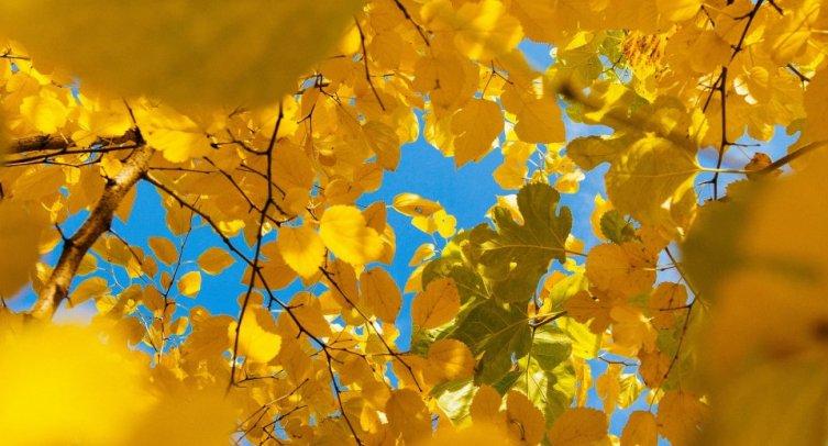 Barwy Lata, Dary Jesieni