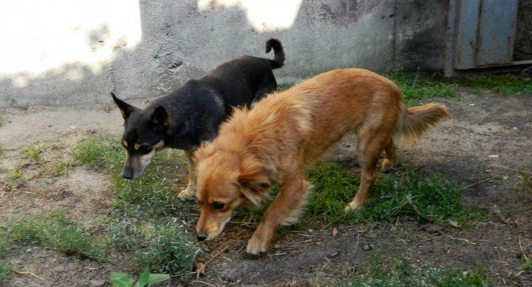 Poszukiwani właściciele, opiekunowie psów – 08.08.2019